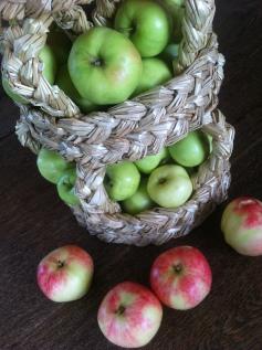 Äppelskörd september 2013